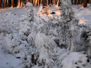 allenbach-christiane-neige-2j-98