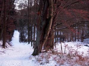 allenbach-christiane-premiere-neige-2017-110
