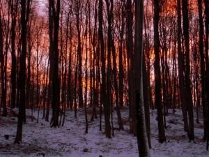 allenbach-christiane-premiere-neige-2017-111
