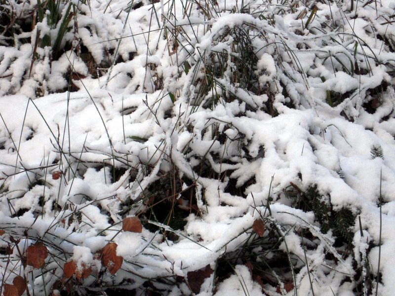 allenbach-christiane-premiere-neige-2017-12