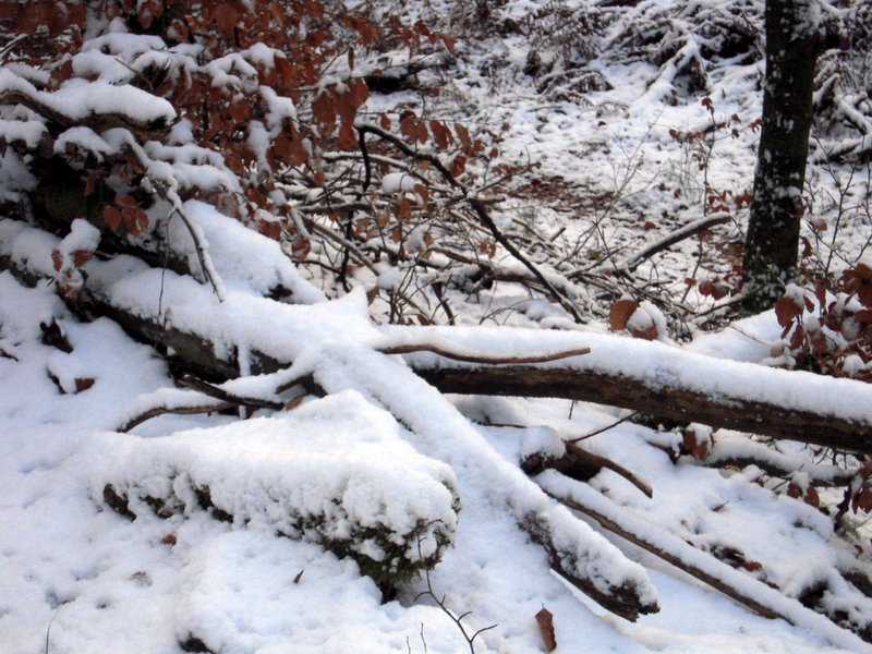 allenbach-christiane-premiere-neige-2017-13