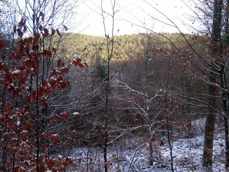 allenbach-christiane-premiere-neige-2017-15