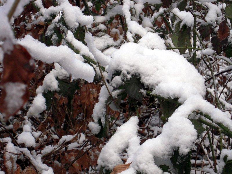allenbach-christiane-premiere-neige-2017-17