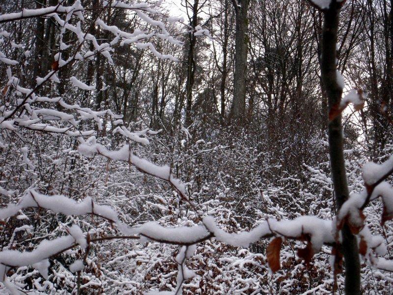 allenbach-christiane-premiere-neige-2017-19
