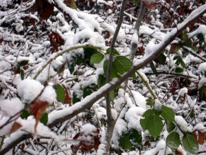 allenbach-christiane-premiere-neige-2017-20
