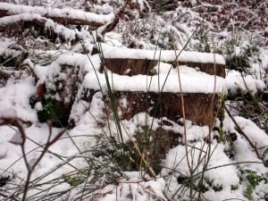 allenbach-christiane-premiere-neige-2017-22