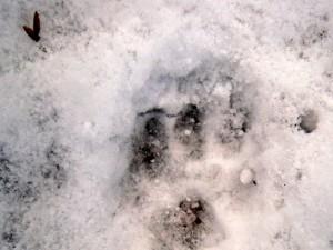 allenbach-christiane-premiere-neige-2017-30