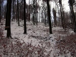 allenbach-christiane-premiere-neige-2017-31
