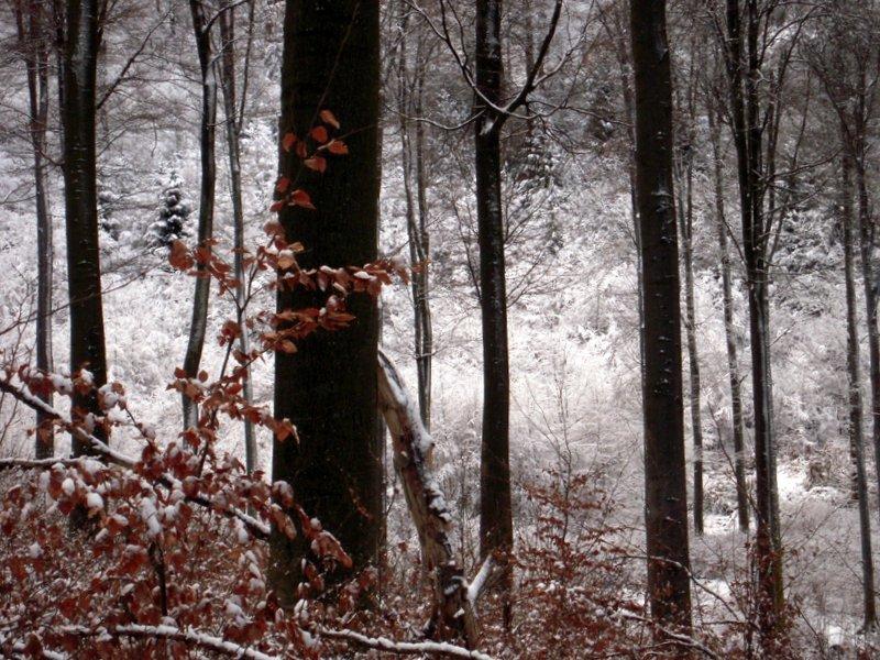 allenbach-christiane-premiere-neige-2017-32