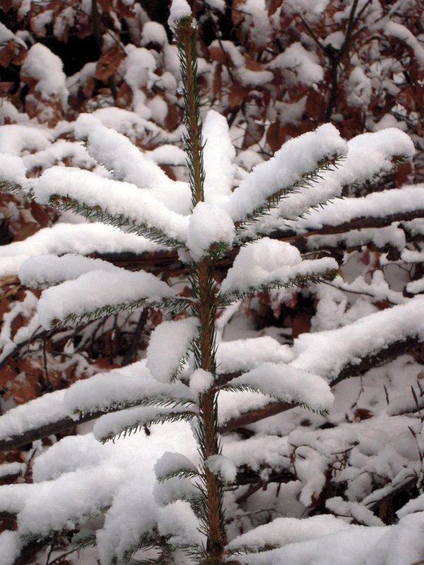 allenbach-christiane-premiere-neige-2017-34
