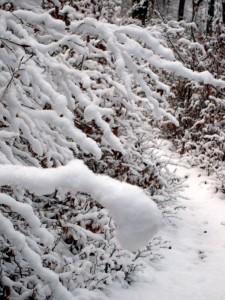 allenbach-christiane-premiere-neige-2017-35
