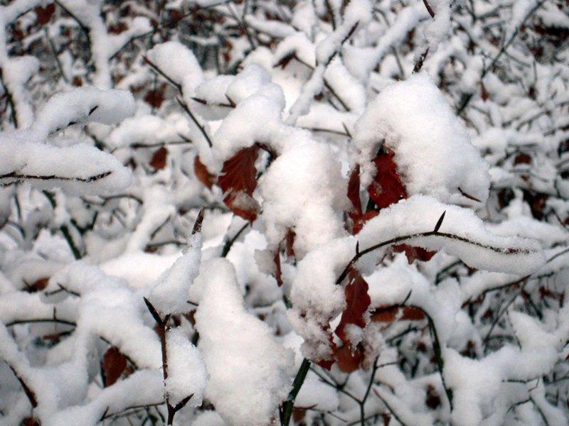allenbach-christiane-premiere-neige-2017-36