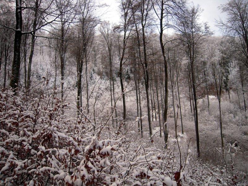 allenbach-christiane-premiere-neige-2017-37