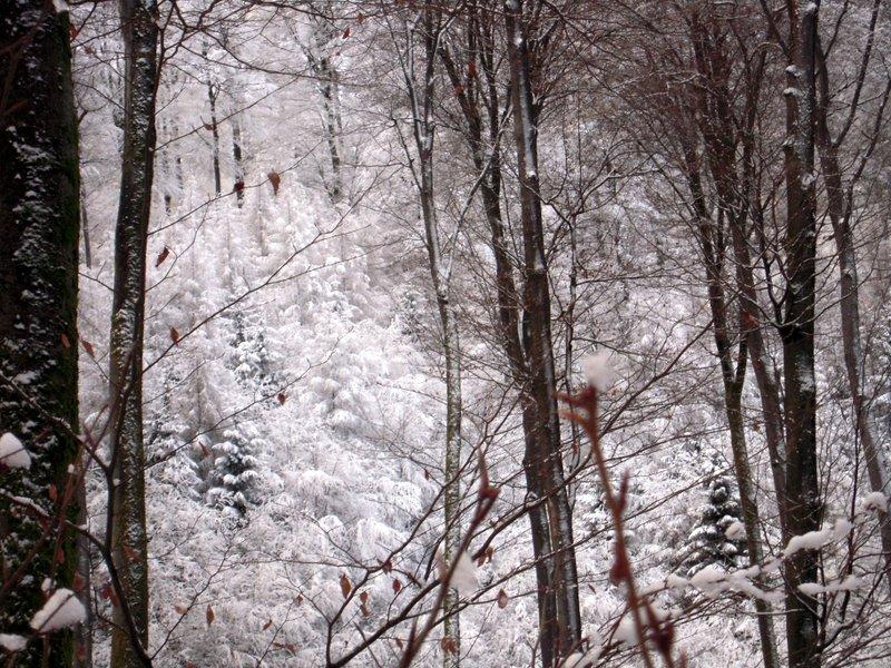 allenbach-christiane-premiere-neige-2017-38