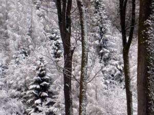 allenbach-christiane-premiere-neige-2017-40