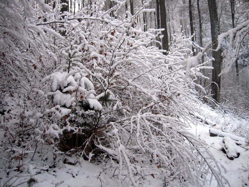 allenbach-christiane-premiere-neige-2017-41