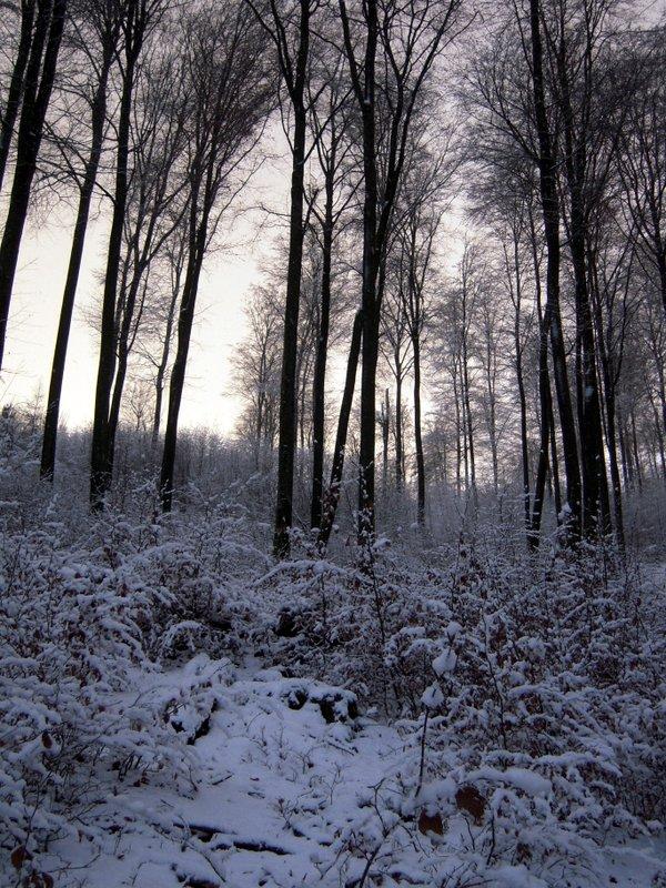 allenbach-christiane-premiere-neige-2017-43