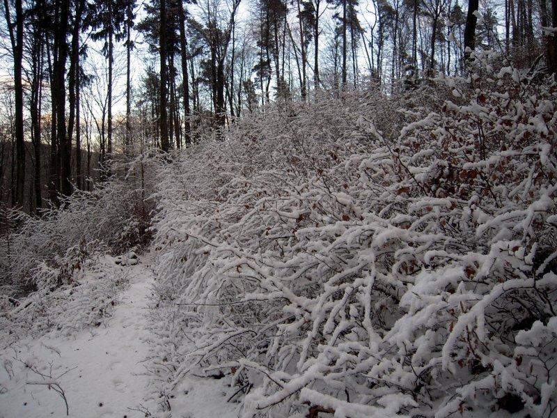 allenbach-christiane-premiere-neige-2017-44