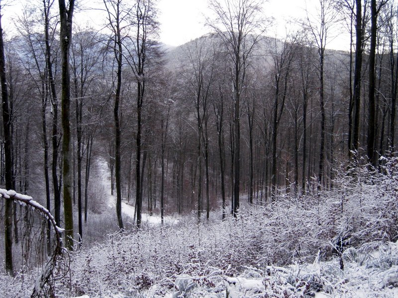 allenbach-christiane-premiere-neige-2017-45