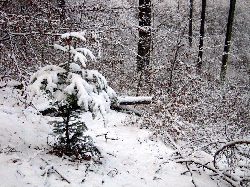 allenbach-christiane-premiere-neige-2017-46
