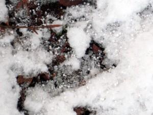allenbach-christiane-premiere-neige-2017-47
