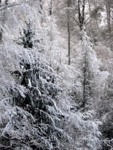 allenbach-christiane-premiere-neige-2017-49