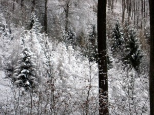 allenbach-christiane-premiere-neige-2017-50