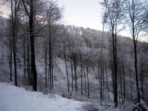 allenbach-christiane-premiere-neige-2017-53