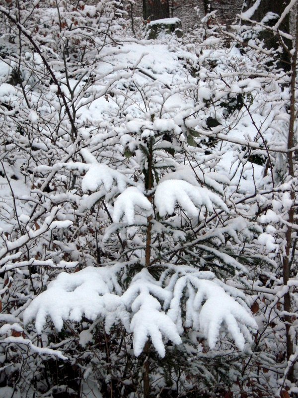 allenbach-christiane-premiere-neige-2017-55