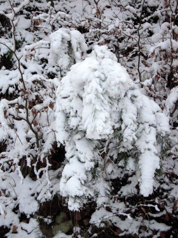 allenbach-christiane-premiere-neige-2017-56
