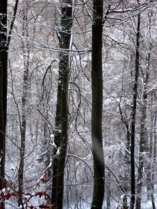 allenbach-christiane-premiere-neige-2017-60