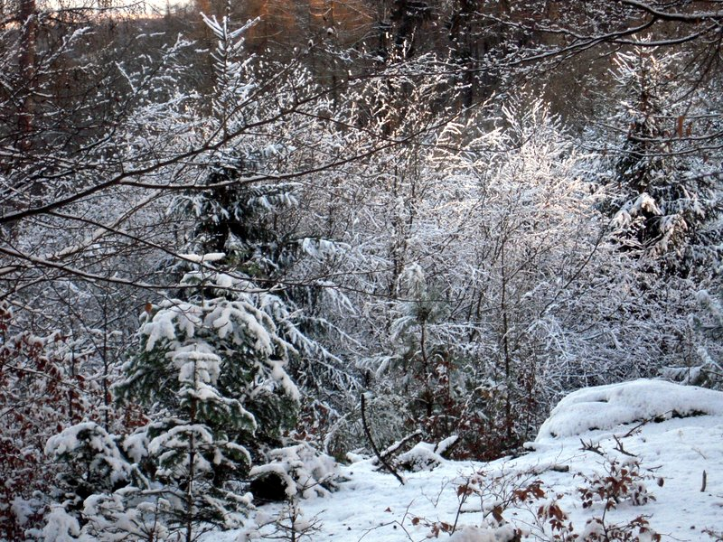 allenbach-christiane-premiere-neige-2017-72