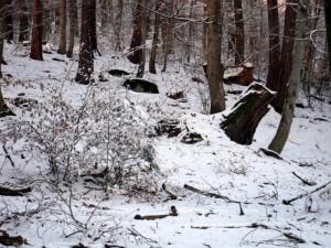 allenbach-christiane-premiere-neige-2017-74