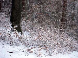 allenbach-christiane-premiere-neige-2017-75