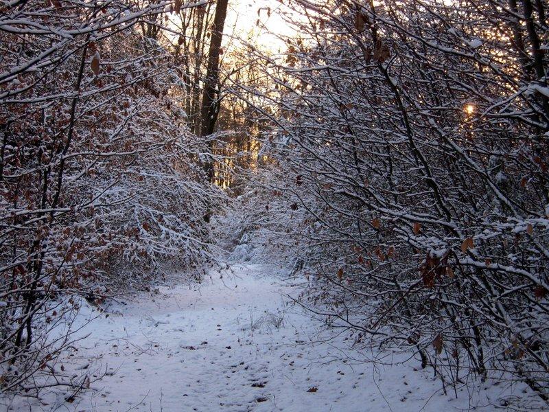 allenbach-christiane-premiere-neige-2017-76