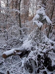allenbach-christiane-premiere-neige-2017-78