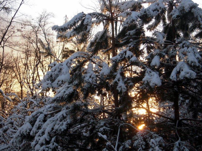 allenbach-christiane-premiere-neige-2017-80