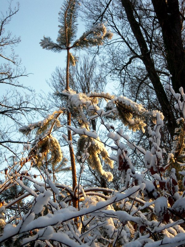 allenbach-christiane-premiere-neige-2017-81