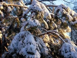 allenbach-christiane-premiere-neige-2017-82