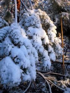 allenbach-christiane-premiere-neige-2017-84