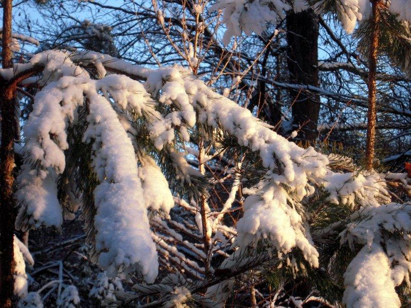 allenbach-christiane-premiere-neige-2017-85