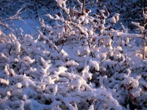 allenbach-christiane-premiere-neige-2017-86