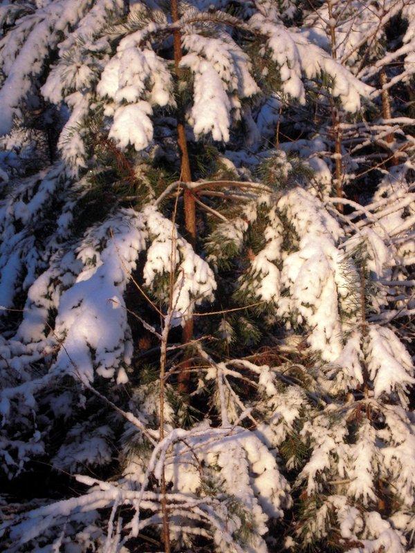 allenbach-christiane-premiere-neige-2017-88
