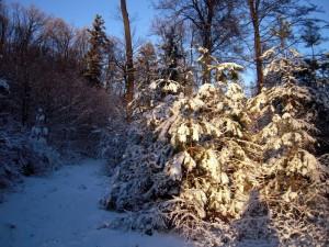 allenbach-christiane-premiere-neige-2017-89