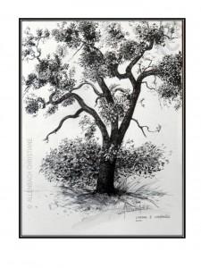 CHRISTIANE ALLENBACH DESSIN ARBRE 30 x 40 cm