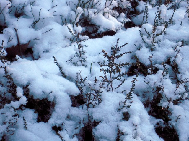 allenbach-christiane-neige-2j-14