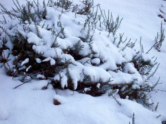 allenbach-christiane-neige-2j-38
