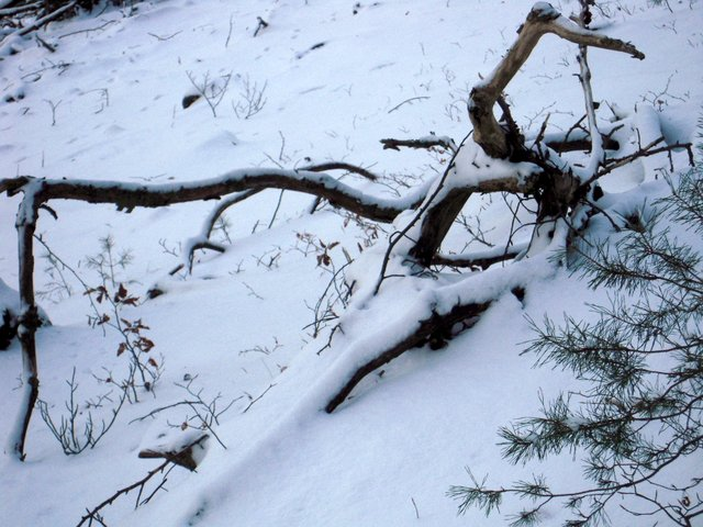 allenbach-christiane-neige-2j-40