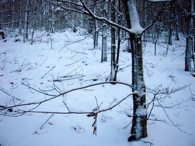 allenbach-christiane-neige-2j-54