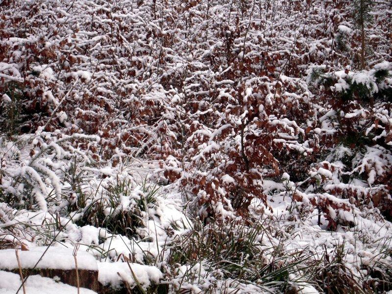 allenbach-christiane-premiere-neige-2017-23
